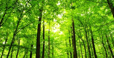מרוב עצים לא רואים את היער